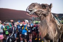 Corredores preparados para el inicio de la Haria Extreme (102 kms) en la isla de Lanzarote. Una comitiva de camellos da color al momento.